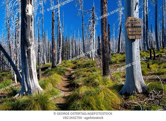 Wilderness sign along Pacific Crest Trail (PCT) in B&B Complex burn, Mt Jefferson Wilderness, Deschutes National Forest, Oregon