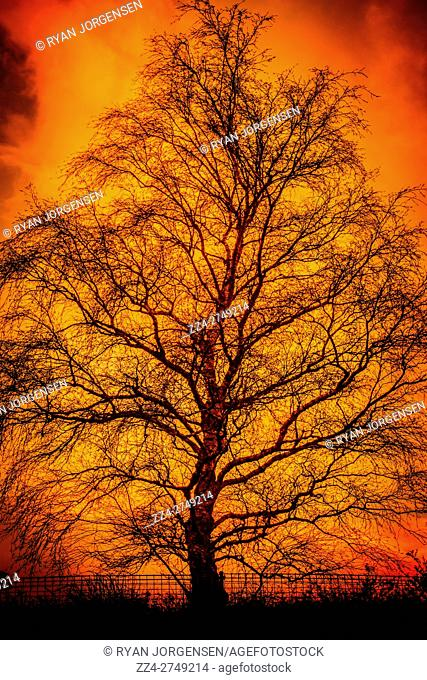 Burning yellow and orange dead tree silhouette in a hellfire of horror and scorn. The fable known as hell
