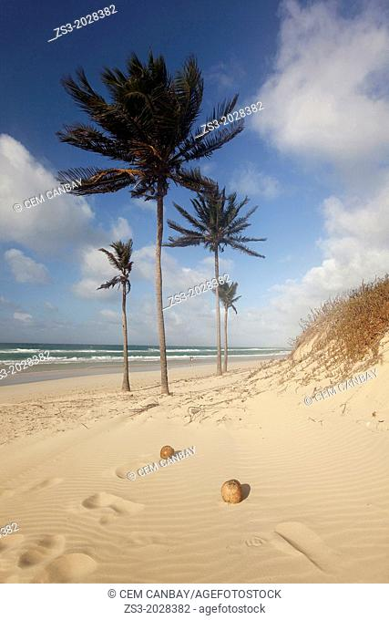 Beach with palm trees, Santa Maria del Mar, Playas del Este, Havana, Cuba