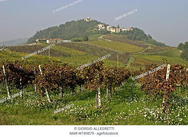 italy, lombardia, oltrepò pavese, canevino, vineyards