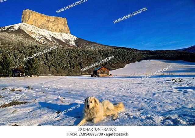 France, Isere, Vercors range, Chichilianne, the Mont Aiguille in Winter, from the hamlet of la Richardiere