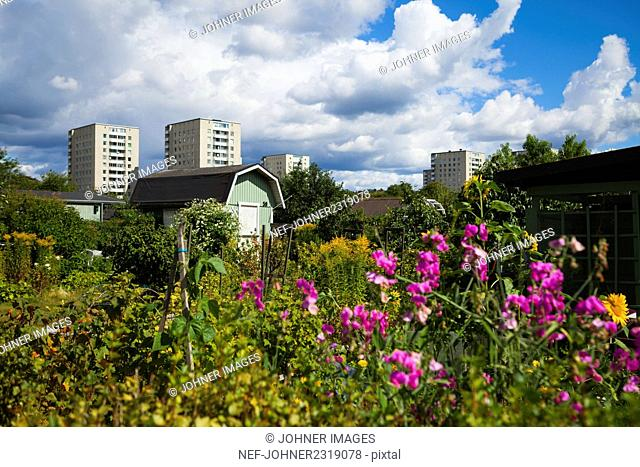 Beautiful garden with cityscape in background