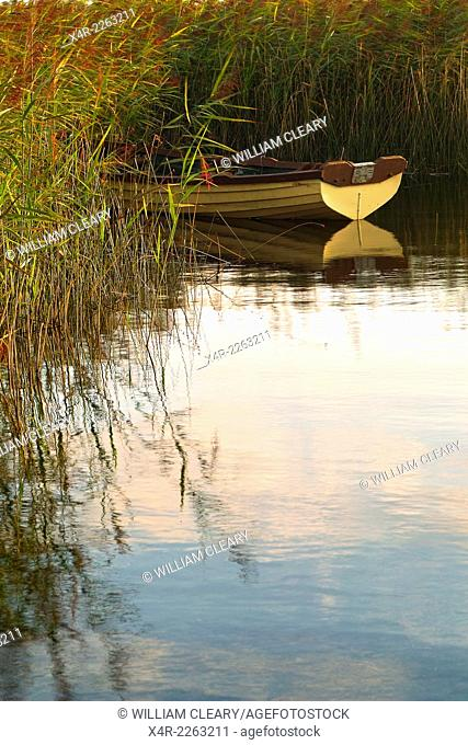 A lake boat among the rushes, Lough Ennell, County Westmeath, Ireland