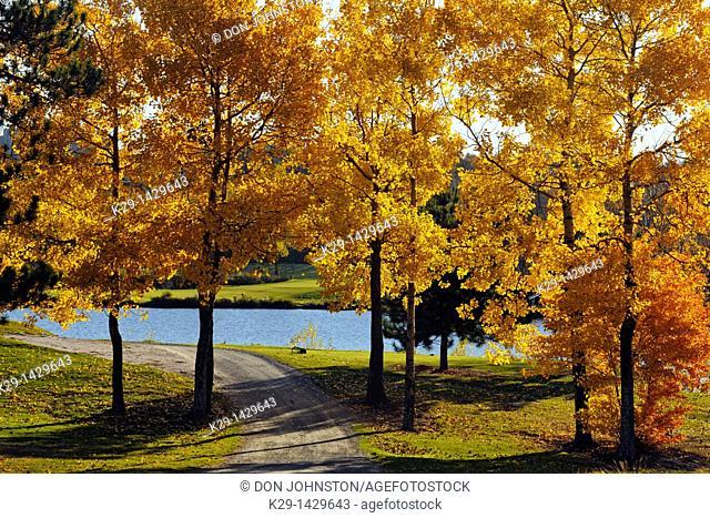 Idylwylde Golf Course with aspen trees overlooking Nepahwin Lake Greater Sudbury Ontario