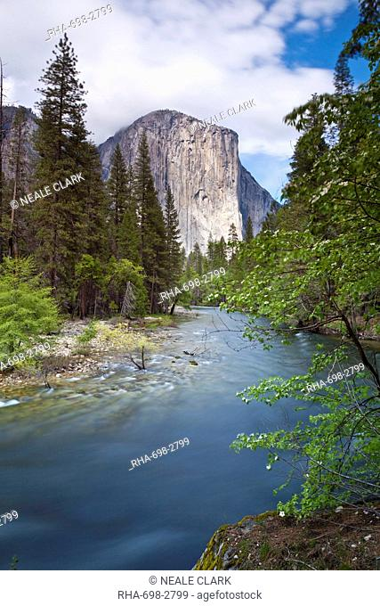 El Capitan, a 3000 feet granite monolith, with the Merced River flowing through Yosemite Valley, Yosemite National Park, UNESCO World Heritage Site