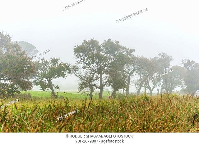Wetland alongside a farm meadow on a misty winter's morning. Cape Town, South Africa