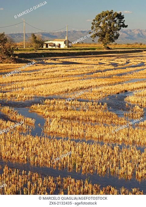 Flooded ricefields after harvest. Ebro River Delta Natural Park, Tarragona province, Catalonia, Spain
