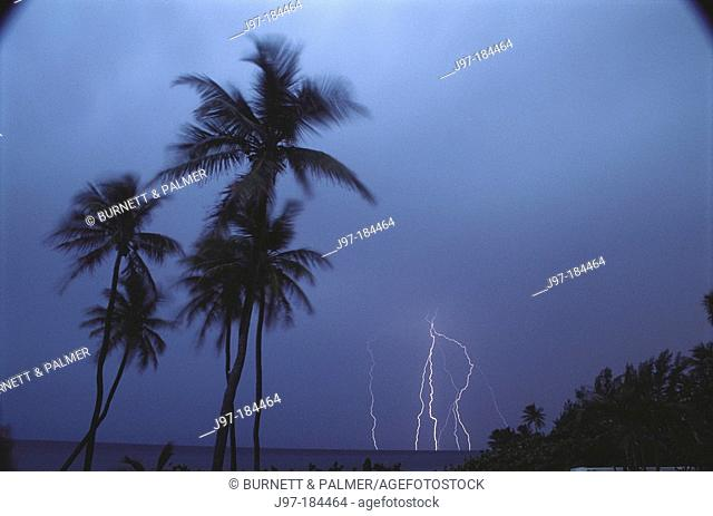 Tropical palms silhouetted in lightning storm sky