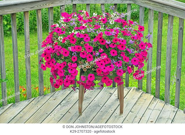 Summer flowers in display pots, Greater Sudbury, Ontario, Canada