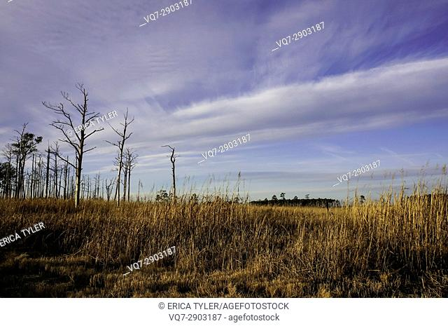Hot Marshland Maryland's Eastern Shore