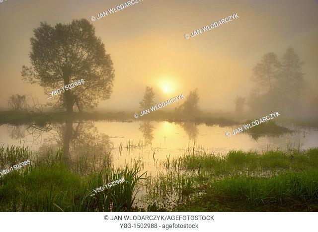 Sunrise, Narew National Park, Poland, Europe
