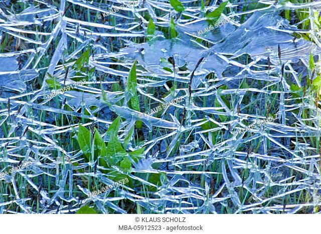 floating filigree ice