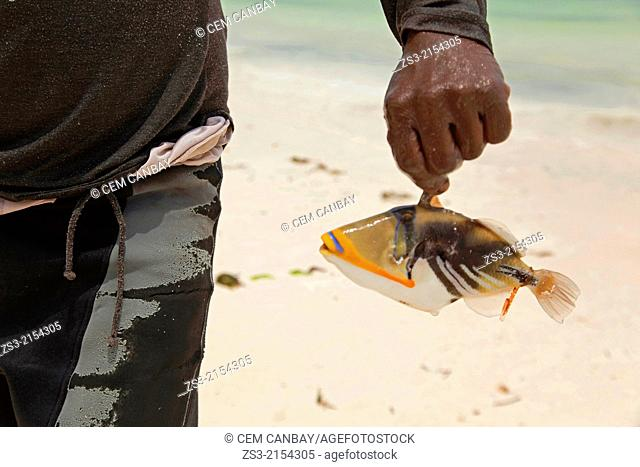 Fisherman showing a small colorful fish on the beach, Jambiani beach, Zanzibar Island, Tanzania, East Africa
