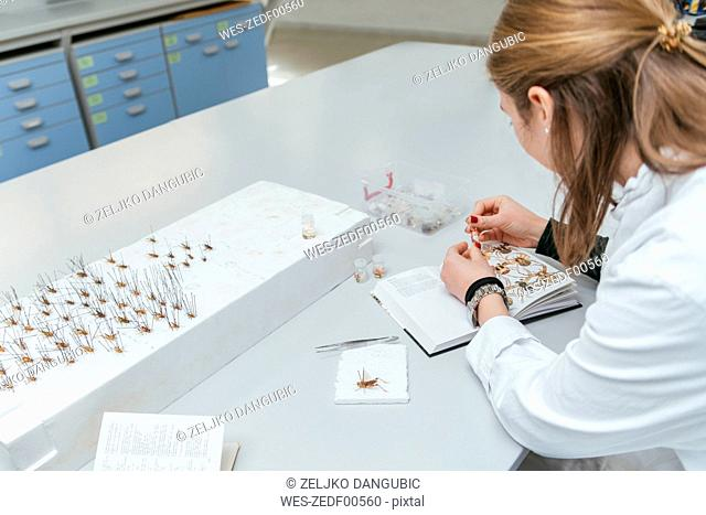 Laboratory technician working in biology lab