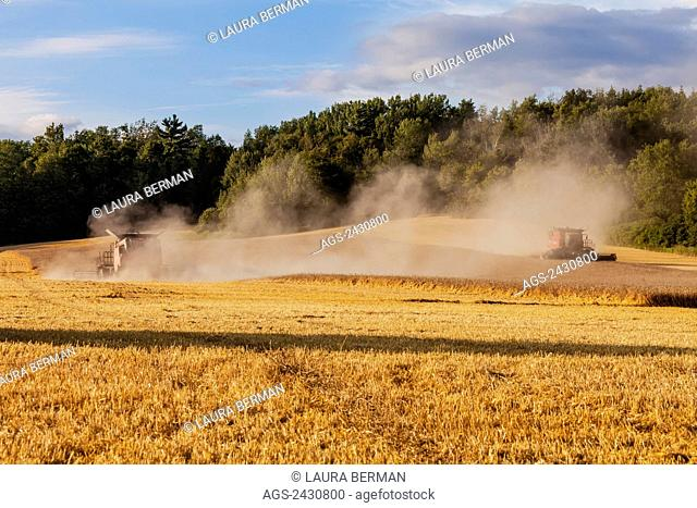 Two red Case 8120 combines harvesting a field of grain; Cramahe, Ontario, Canada