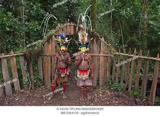 Huli Wig-men at Makara Bird View Lodge, Tari, Papua New Guinea, Oceania