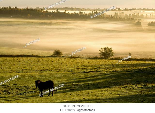 Horses in the morning mist, North Wiltshire, Prince Edward Island