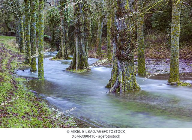 Flood trees in the Urederra river banks. Allin, Navarre, Spain, Europe