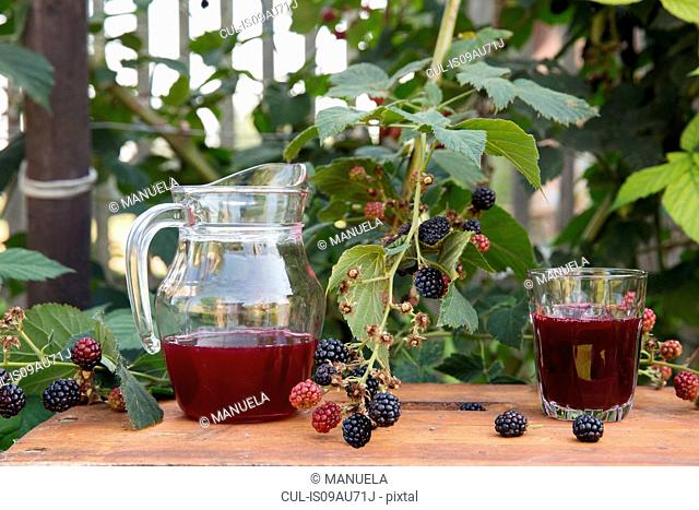 Pitcher of fresh fruit juice and glass of fresh juice, on table in garden, next to blackberry bush