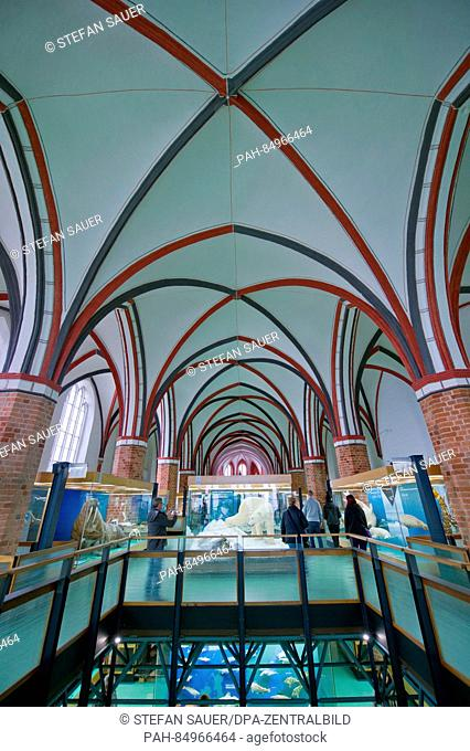 View of the Gothic hall of the former Katharinen convent, nowadays part of the Oceanographic Museum in Stralsund, Germany, 20 October 2016