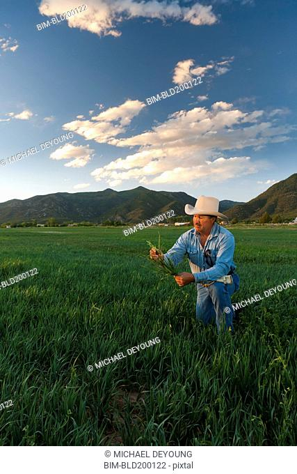 Hispanic man looking at crop