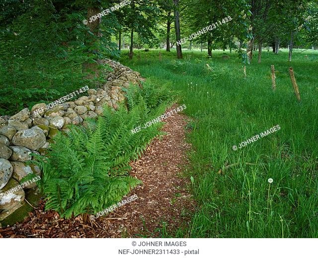 Green fern and grass in backyard