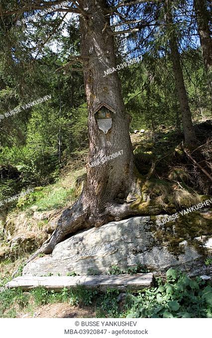 Austria, Vorarlberg, Montafon, silver-valley, tree, memorial plaque