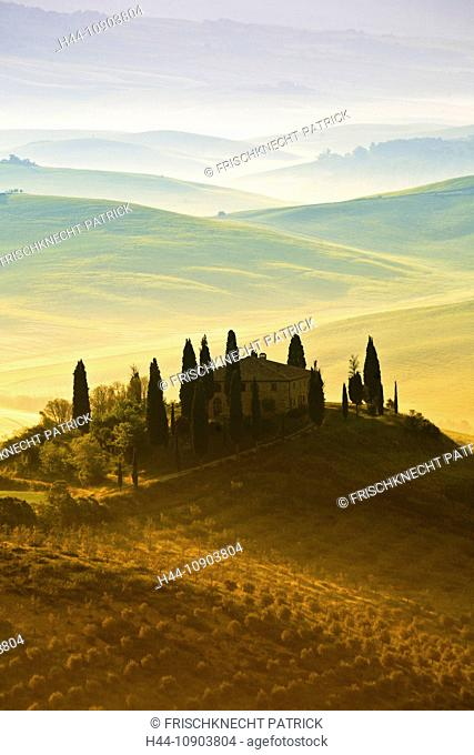 Cultivation, Italy, Toscana, tree, trees, Cupressus sempervirens, Cypress, field, grain, Italian Cypress, agriculture, wheat, plant, green, several