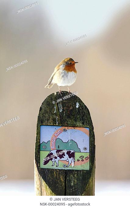 One European Robin (Erithacus rubecula) perched on a post with a sign of a hicking trail, the Netherlands, gelderland, Fikkersdries
