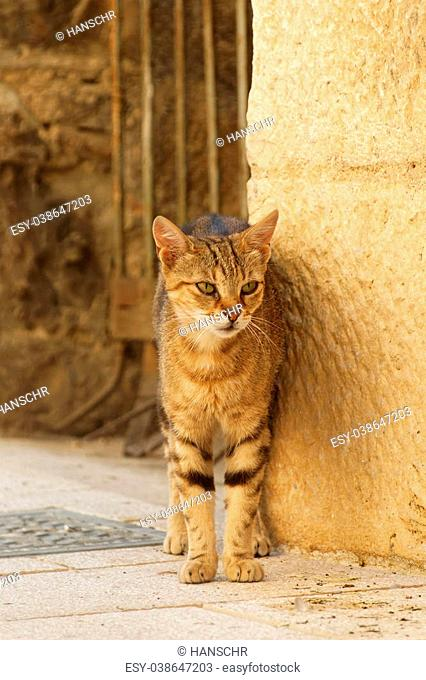 Yellow cat with green eyes in front of a brown wall and metal bars in an ancient city