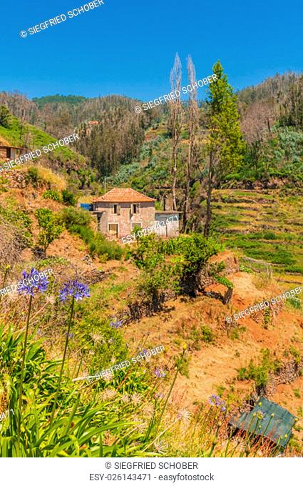 levada walking trail to the east of madeira - levada dos tornos - in camacha in the mountains with vacant dilapidated houses and broke terraced fields