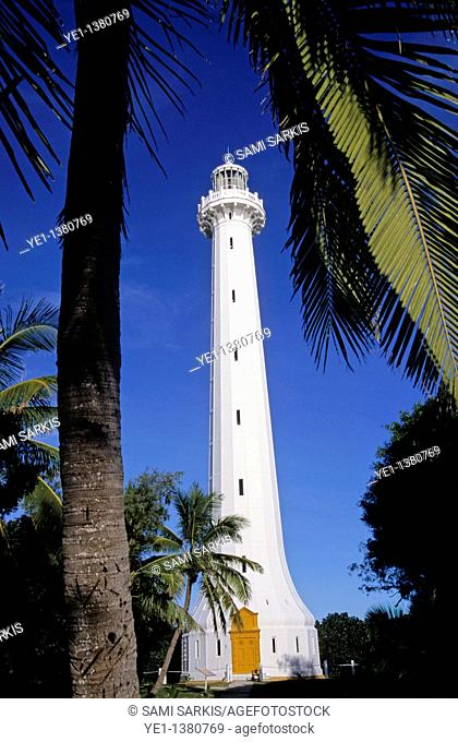 Palm tree in front of Amedee Lighthouse, Noumea Lagoon, New Caledonia