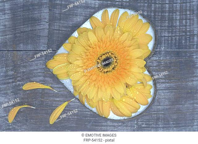 Wooden plank and marigold blossom in heart shaped hole
