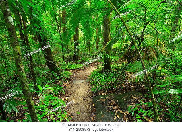 Rainforest Walk, Daintree Rainforest, Mossman Gorge, Mossman, Queensland, Australia