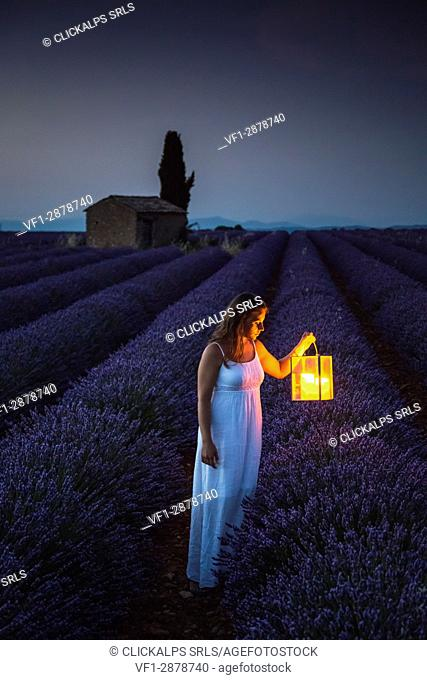 Woman with lantern at dawn in a lavender field. Plateau de Valensole, Alpes-de-Haute-Provence, Provence-Alpes-Côte d'Azur, France, Europe