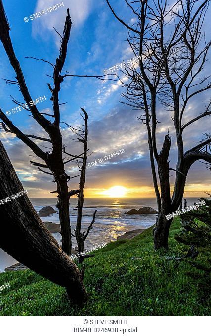 Trees on hill near ocean at sunset
