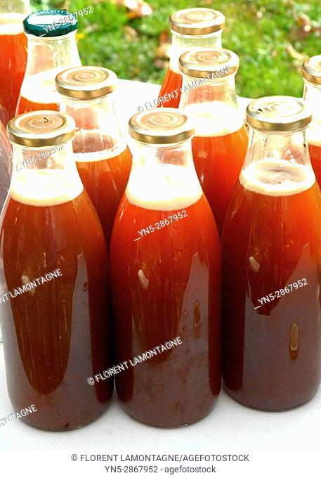 Juice extractor for making natural and organic apple juice - Step 5: transfer of fresh fruit juice into glass bottles for sterilization
