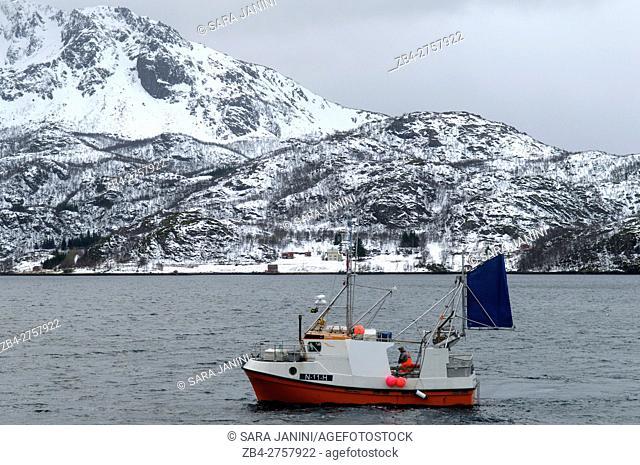 Skrei fishing, Myre, Vesterålen Islands, Nordland County, Norway, Europe