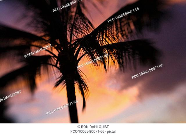 Hawaii, Palm tree silhouette with orange clouds at sunset