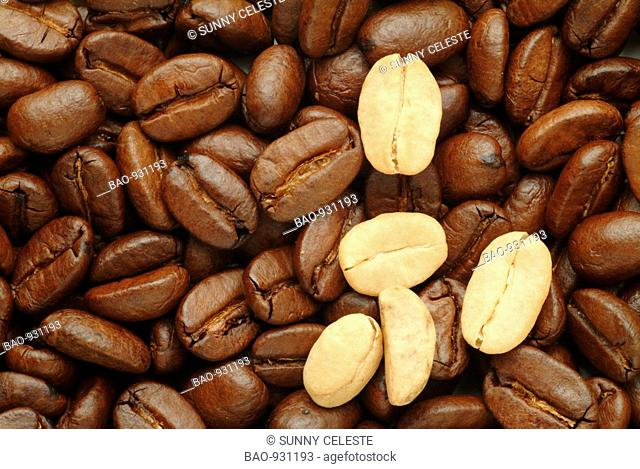 roasted and some green coffee-beans, coffea spp, coffea arabica