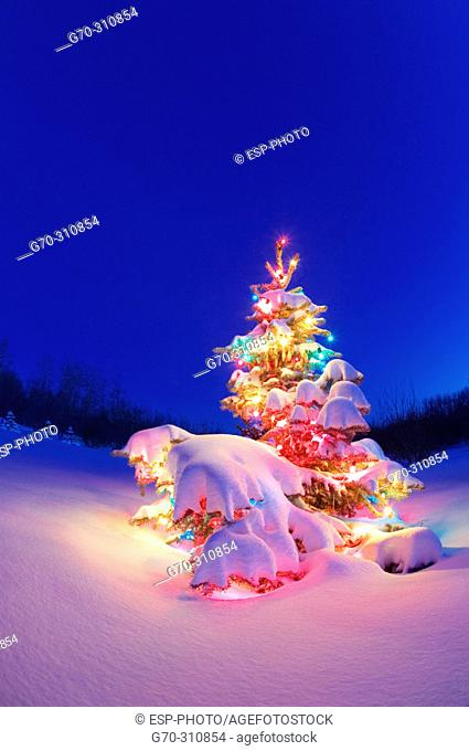 Lighted christmas tree, outdoors