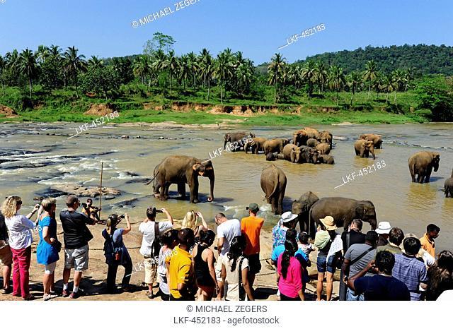 Tourists observing elephants bathing in the Ma Oya river, Pinnawela Elephant Orphanage, Pinnawela, Kegalle, Province of Sabaraga