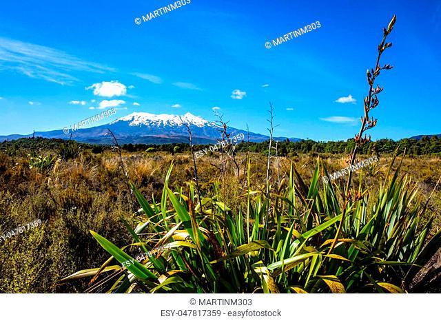 Landscape view of Mt Ruapehu in Tongariro national park, North Island, New Zealand