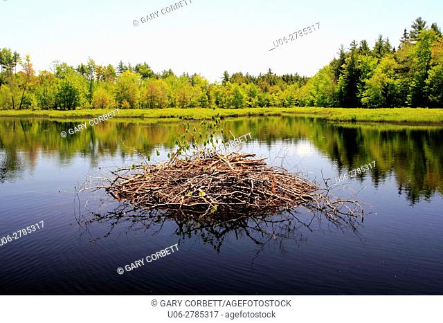 a beaver house in a lake