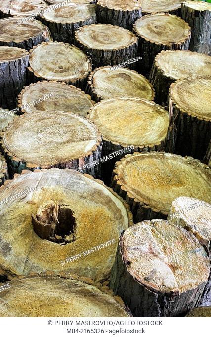 Close-up of rows of cut logs, Laurentians, Quebec, Canada