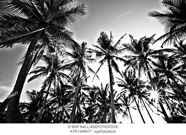 Palm trees on tropical island
