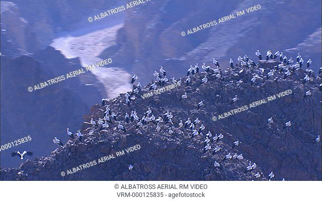 Aerial footage of migrating Storks; Eilat mountains; Israel. Almost 360 degree Three hundred and sixty degree shot of perching storks