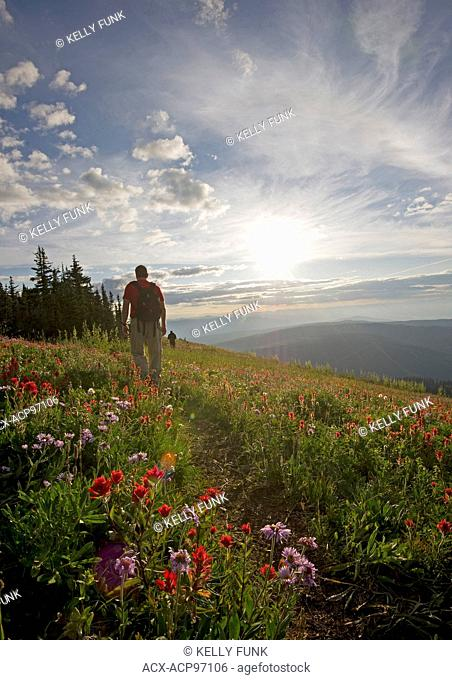 A pair of hikers walk an established trail while enjoying the sunrise at Sun Peaks Resort, east of Kamloops, Thompson Okanagan region of British Columbia