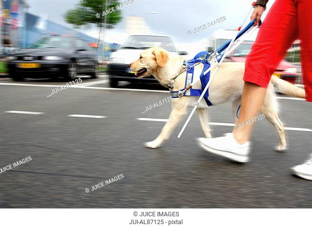 Blind woman and seeing eye dog crossing street