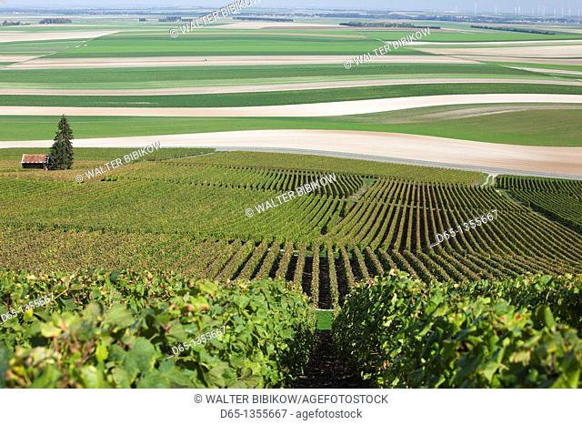 France, Marne, Champagne Region, Mont Aime, elevated view of vineyards and fields